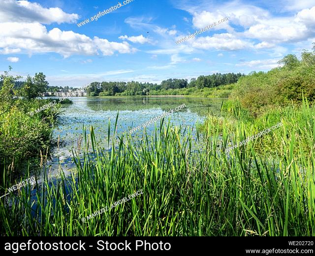 Juanita Bay Park is primarily a natural preserve surrounding one of Lake Washington's last remaining natural wetlands. Juanita Bay Park abounds with flora and...