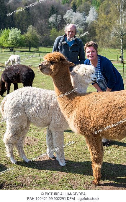 15 April 2019, Saarland, Saarbrücken: Christiane Groß and Rainer Frenkel are standing on the pasture with their alpaca. At the alpaca farm in Saarbrücken