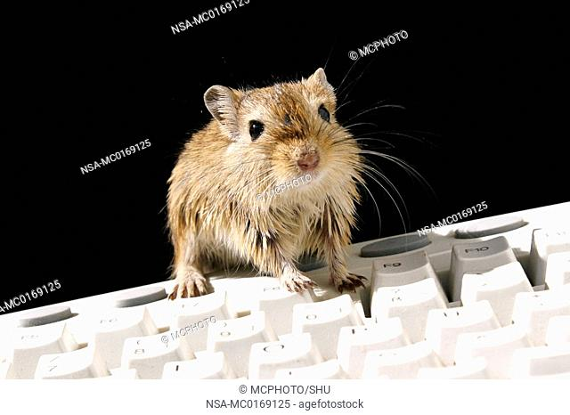 mouse and computer