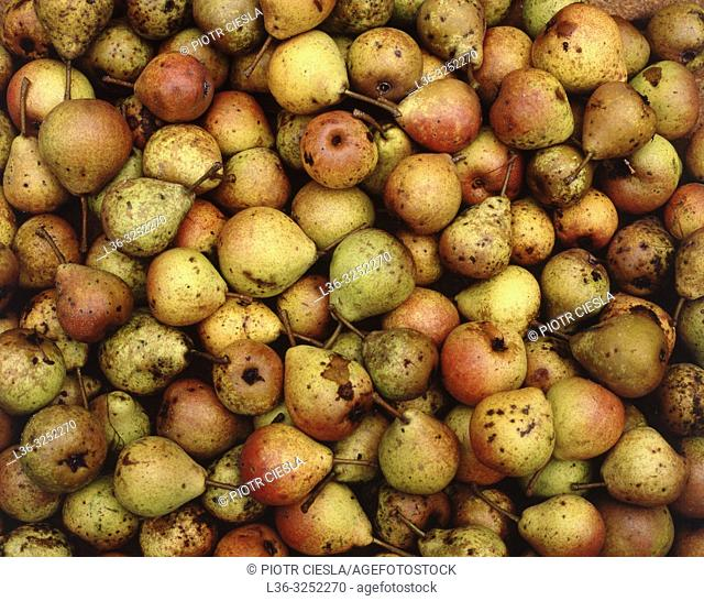 Wild pears