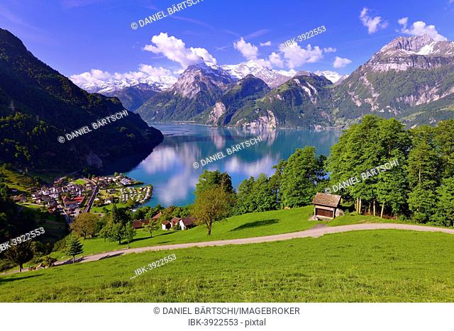 Views of Sisikon and Urnersee lake, part of Lake Lucerne, Swiss Path, Uri Alps or Urner Alps in Central Switzerland with the mountains Brunnistock