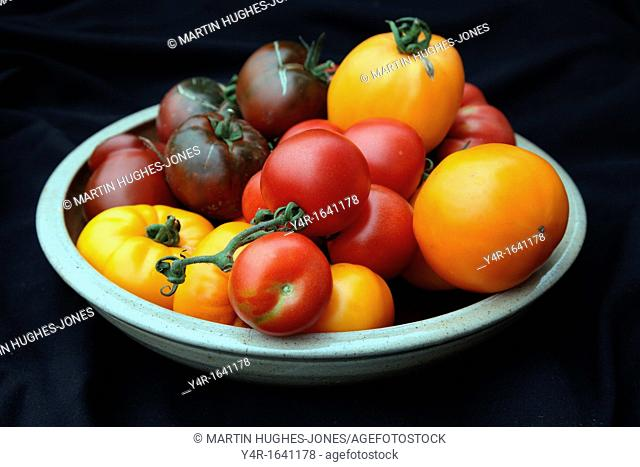 Heritage tomatoes in a pottery bowl -'Russian Persimmon', 'Coeur de Boeuf' or 'Beefheart' orange form, 'Alicante', 'Omar's Lebanese' - pink and 'Paul Robeson' -...