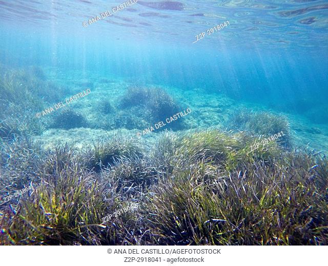 Turquoise water in Minorca, Balearics Islands, Spain. Underwater image