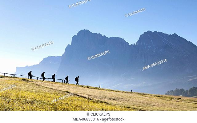 Europe, Italy, South Tyrol, Bolzano, Dolomites, hikers walk in a row on the Alpe di Siusi, in the background the Sassolungo