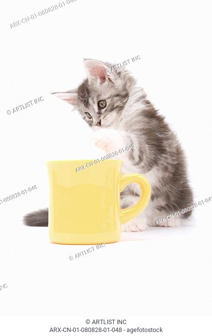 A kitten and a yellow cup