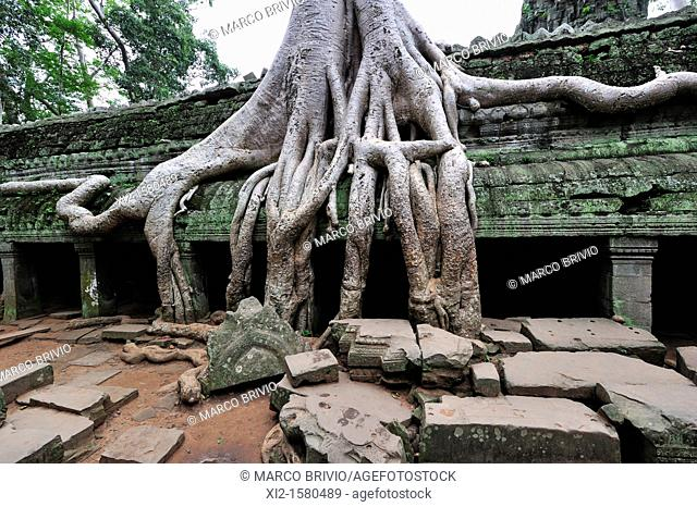 Ta Prohm temple overtaken by trees, Angkor Wat, Siem Reap, Cambodia