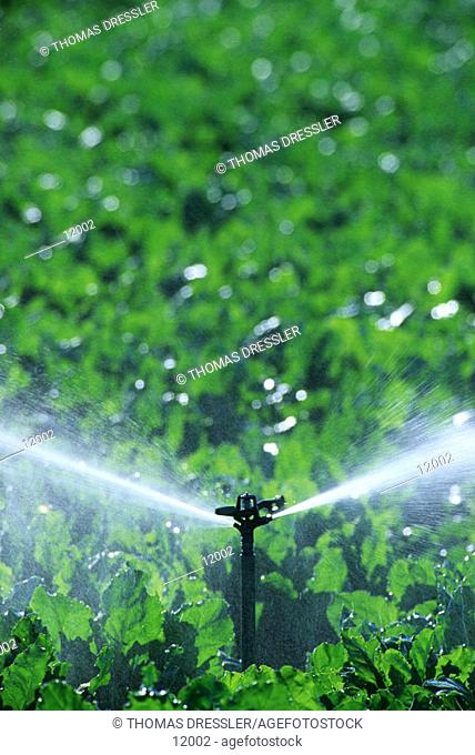 Irrigation of a cultivated field, Sevilla province, Andalucía, Spain