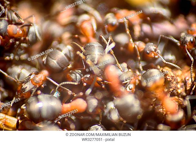 ants moving in anthill Marco many insects background