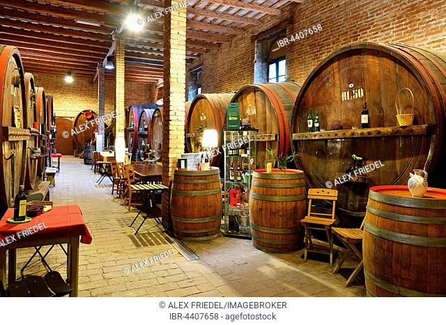 Barrels in cellar, Antica Cantina San't Amico winery, Morro D'Alba, Marche, Italy