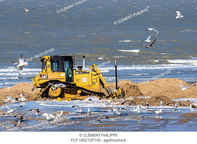 Bulldozer used for sand replenishment / beach nourishment to make wider beaches to reduce storm damage to coastal structures along the Belgian coast
