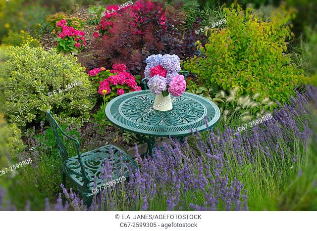 Hydrangers and garden table with flower arrangement in Summer. Norfolk, England