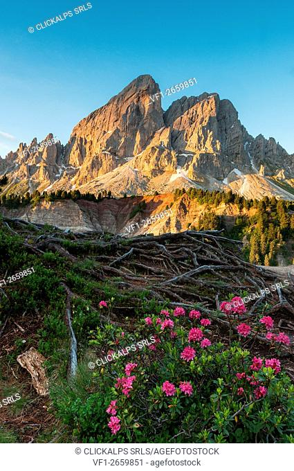 Passo delle Erbe, Dolomites, South Tyrol, Italy. Sunrise at Sass de Putia/Peitlerkofel in the Natural Park Puez-Odle