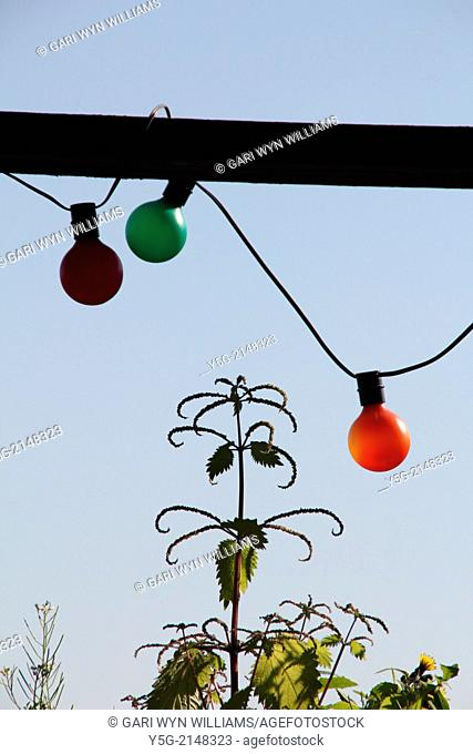 colourful hanging bulbs and nettle plant in garden