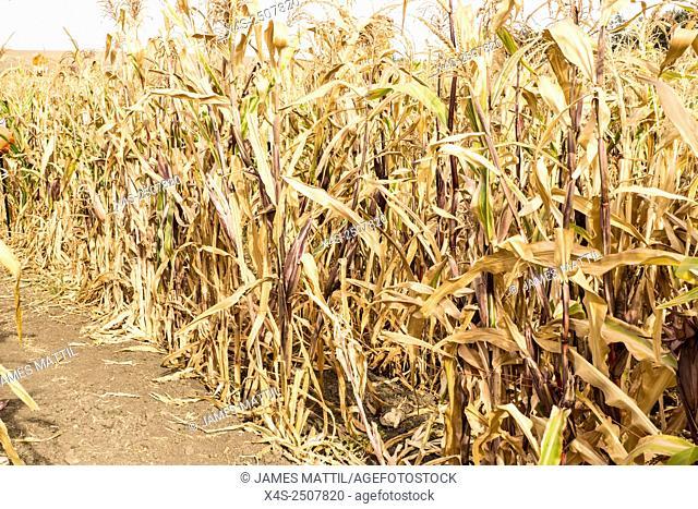 Harvest season a a country farm