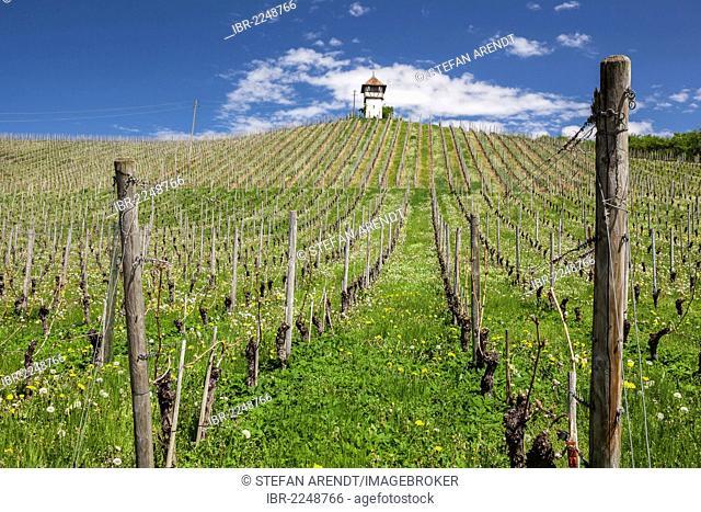 Tower on Lerchenberg hill in the vineyards near Meersburg, Baden-Wuerttemberg, Germany, Europe