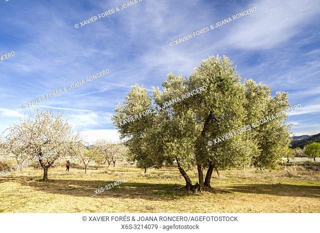 Crop fields near Beceite, Matarraña, Teruel, Spain