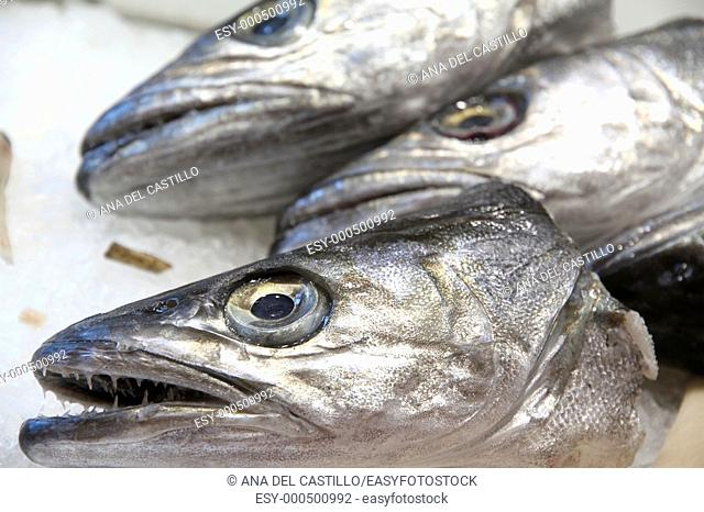 Heads of hakes at a fishmonger's, Burjassot market, Valencia province, Spain
