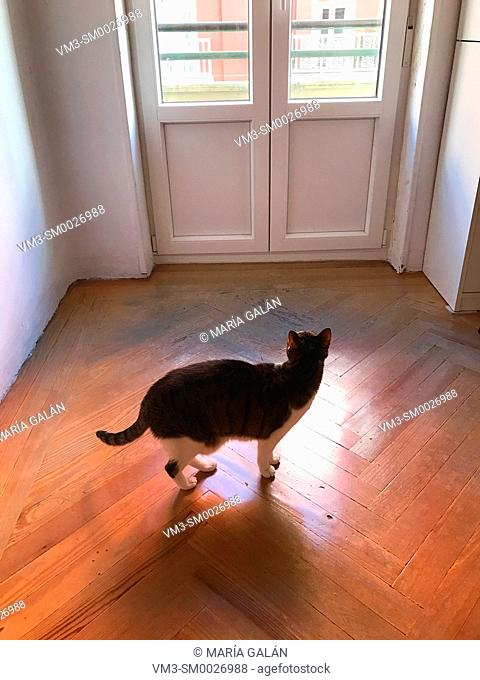 Cat in an empty room, looking at the closed window