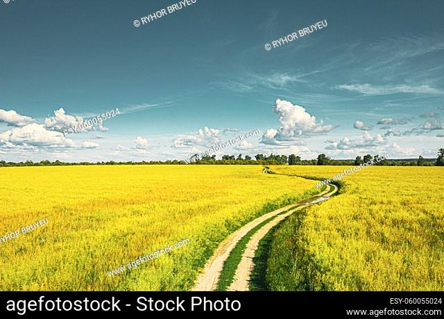 Aerial View Of Agricultural Landscape Green Field In Spring Season. Beautiful Rural Country Road