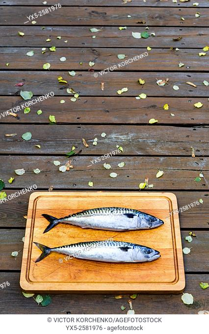 Fresh Spanish mackerel on a cutting board
