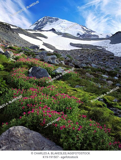 Wildflowers below Mount Hood. Mount Hood National Forest. Oregon. USA