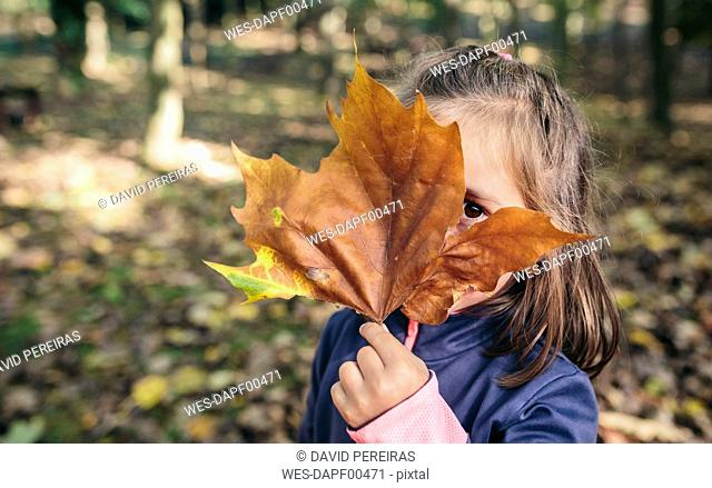 Little girl hiding her face behind autumn leaf