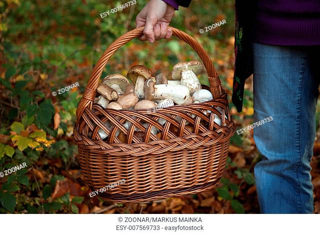 Sammeln Stock Photos and Images | age fotostock