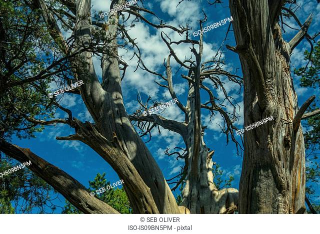 Tree branches shot against blue sky, Grand Canyon, Arizona, USA