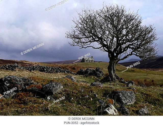 Lonely ruin and tree in landscape of Strathbora