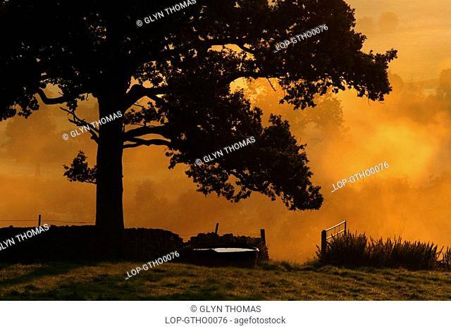 England, Derbyshire, Heage, Misty sunrise over farmland at Heage in the Derbyshire Dales