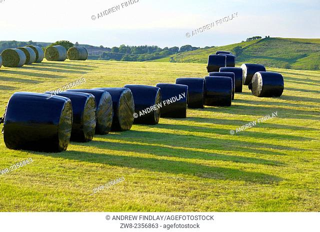 Silage bales rapped in black plastic in a field. Gilsland, Cumbria, England, UK
