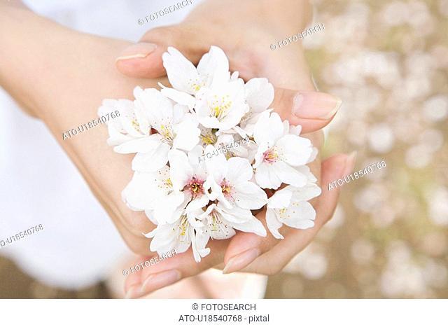 Cherry blossom and palm