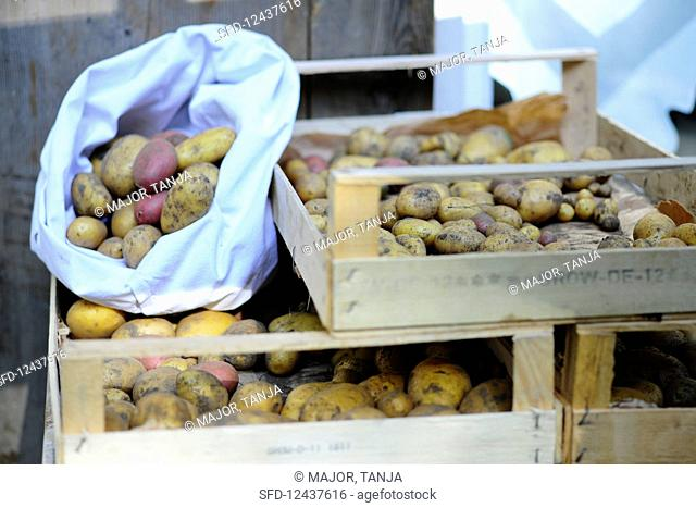 A sack of potatoes on crates of potatoes