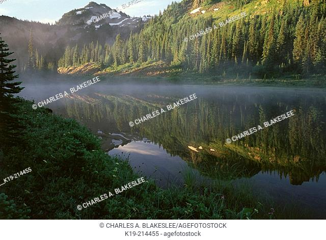 Morning mist on reflection lake (morning, August). Mount Rainier National Park. Washington. USA