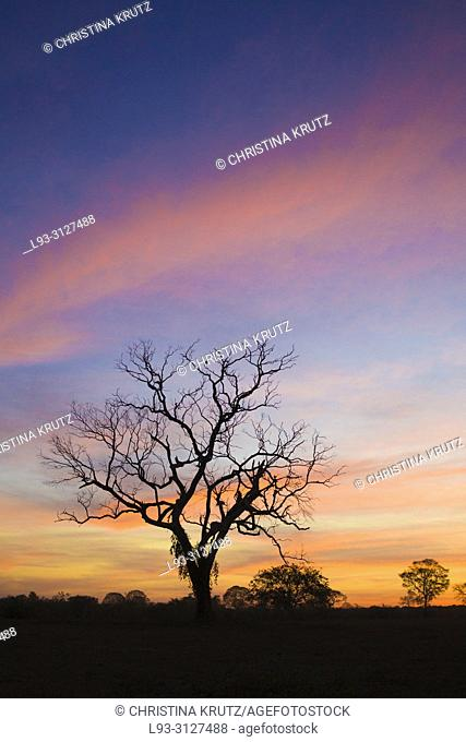 Beautiful sky after sunset in the Pantanal, Mato Grosso, Brazil