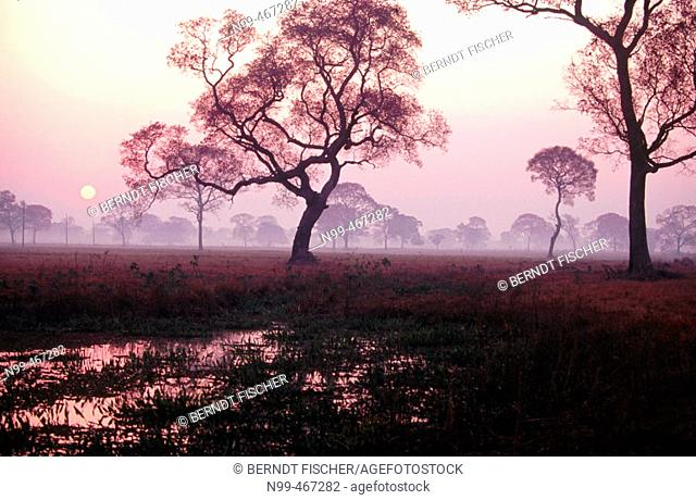 Water pond in dry pasture trees. Sunrise. Pantanal near Pocone. Mato Grosso. Brazil