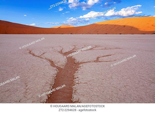 Landscape photo of a drainage pattern resembling a tree in Deadvlei. vlei, Namib Naukluft National Park, Namibia