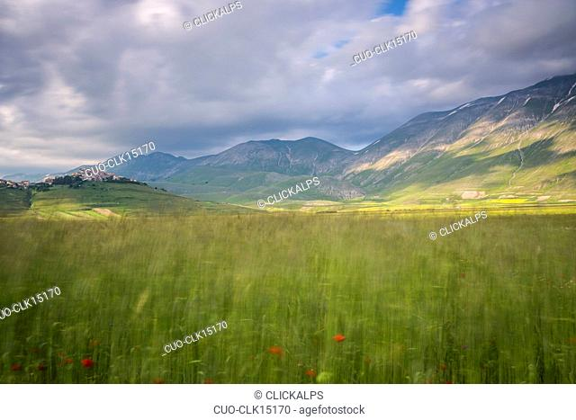 Green fields of ears of corn frame the medieval village Castelluccio di Norcia, Umbria, Italy, Europe