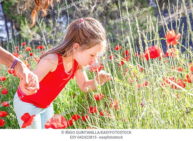 little four years old cute girl, in summer, taking and smelling a red poppy flower in the countryside, holding hand to mother