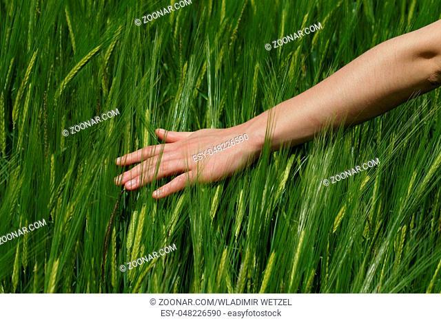 Eine Frau streicht über eine frisches Getreidefeld