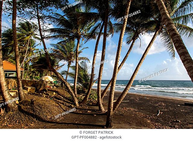 COCONUT PALMS AND THE BLACK SAND BEACH OF SAINTE-MARIE, MARTINIQUE, FRENCH ANTILLES, FRANCE