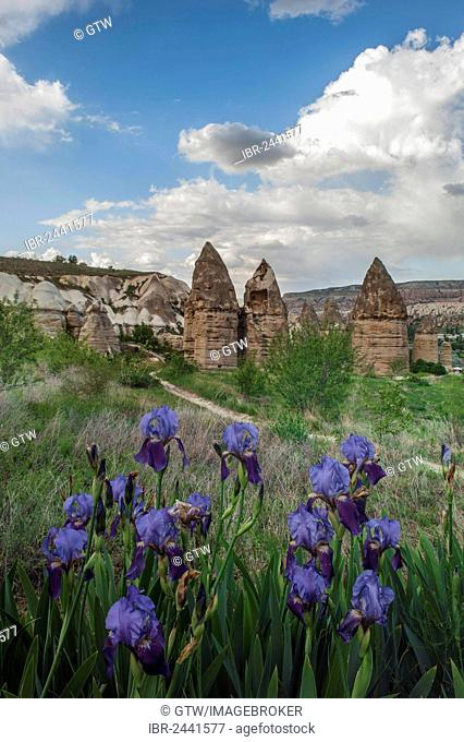 Rock formation, Fairy Chimneys, Uchisar, Göreme National Park, Unesco World Heritage Site, Cappadocia, Turkey