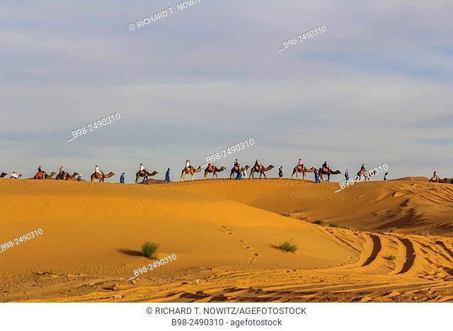 Camel Caravan at the Merzouga Desert, Eastern Sahara, Erg Chebbi Dunes Chain of Dunes