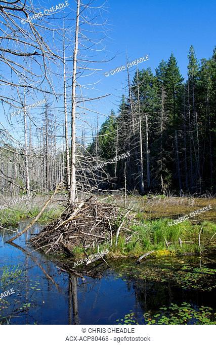 Beaver Lodge and pond, Sechlelt, British Columbia, Canada