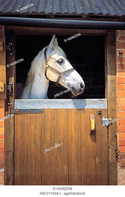 Horse in the stable looking out through window