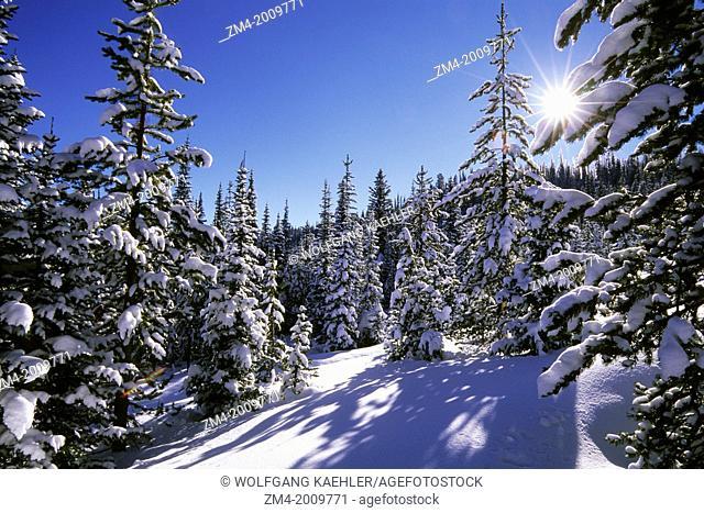 USA, IDAHO, NEAR WEST YELLOWSTONE, GALLATIN-TARGHEE NATIONAL FOREST, TWO TOPS, FOREST WINTER SCENE, STARBURST