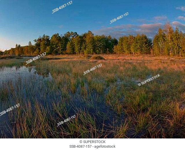 Swamp in a forest, Kelderhouse Swamp, Leelanau County, Michigan, USA