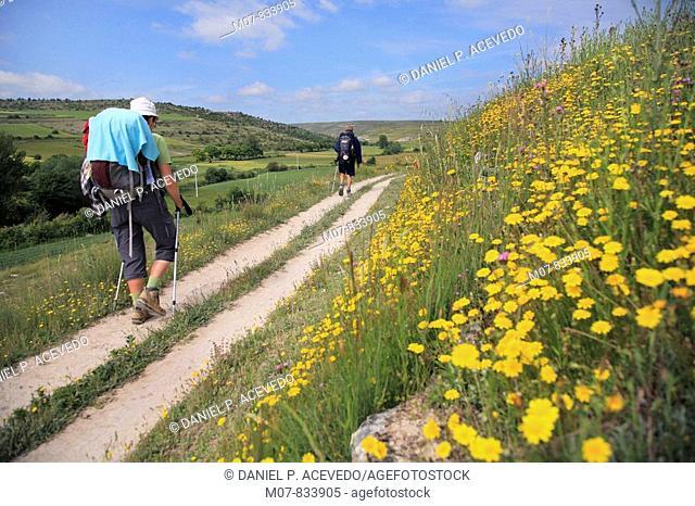 Camino de Santiago,Castilla, Castilla León, Spain