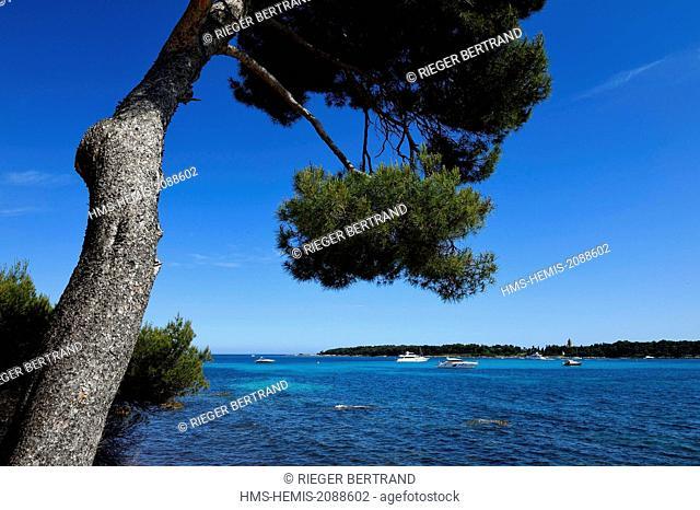 France, Alpes Maritimes, Lerins Islands, Sainte Marguerite island, the south coast facing the Saint Honorat island