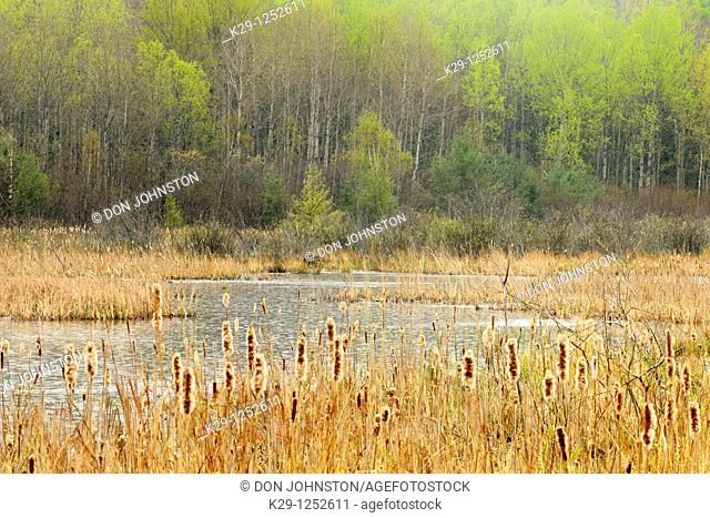 beaver pond in rain. Ontario. Canada